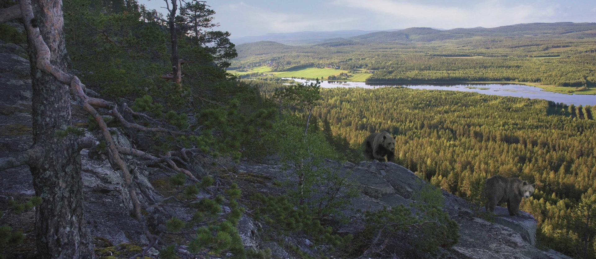 Финский северный лес